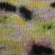 2011 - Paysages, noir brûlé / Black burnt landscape n°5